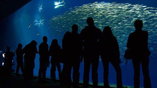 people looking at fish in an aquarium