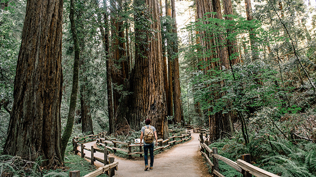 Walk Among Giants 7 Places To See