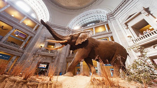 museum of natural history in Washington DC
