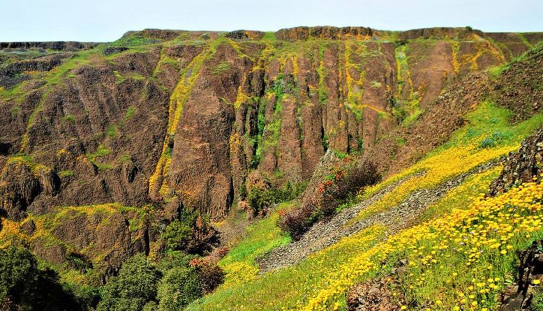 Wildflowers and cliffs at North Table Ecological reserve near sacramento