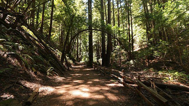 A trail on Redwood Regional Park