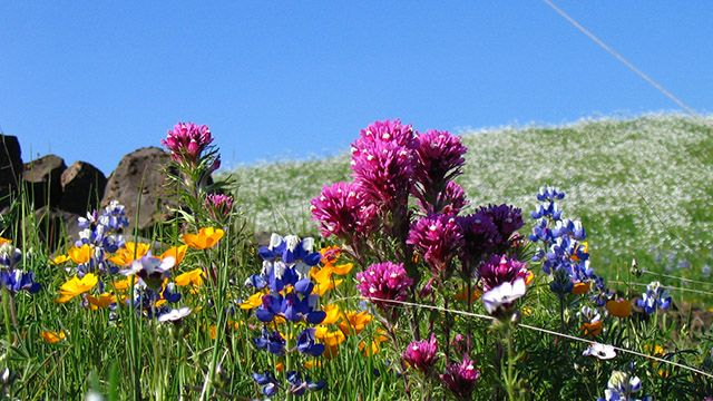 Flowers at North Table Mountain Ecological Reserve