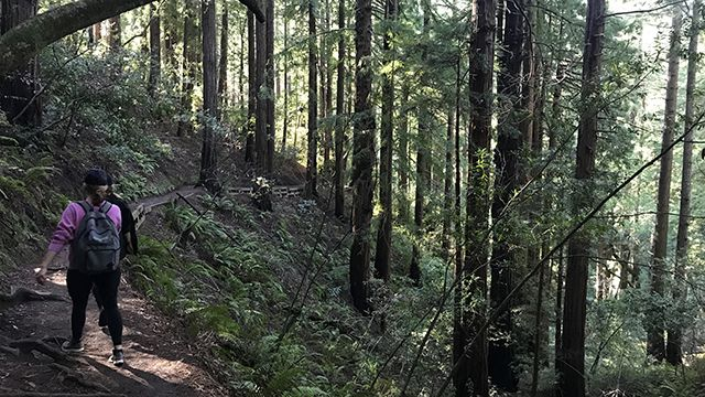 woman hiking through the redwoods