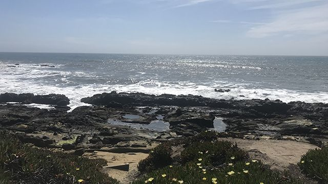 tide pools near Pigeon Point Lighthouse