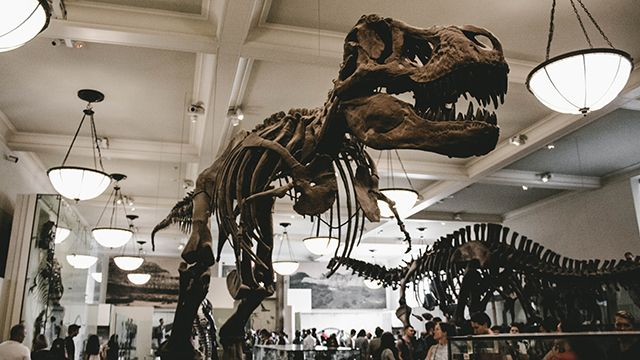 a dinosaur skeleton at NYC's American Museum of Natural History